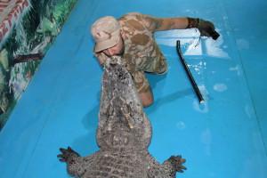 крокодил на съемку