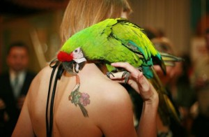 Попугай ара на праздник