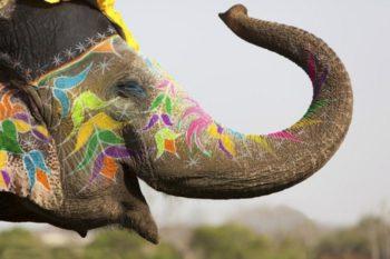 Аренда слона