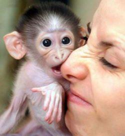Дрессировка обезьян