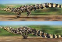 Ближайшие родственники крокодилов – птицы?