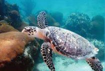 «Плетешься как черепаха» — действительно ли черепахи такие медленные?