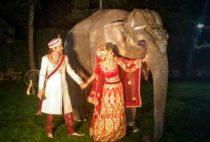 Слон в Москве