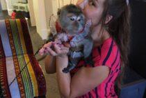 Немного о яванской породе обезьян